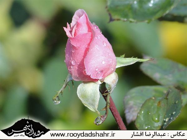 http://roydad.persiangig.com/rooydadshahr/rooydadshahr10.jpg